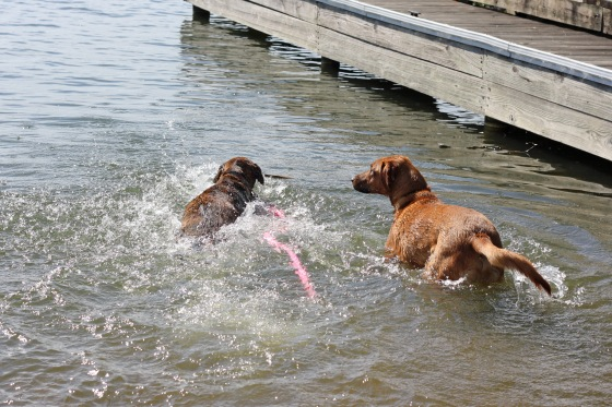 Chase and Piper in the Water
