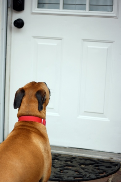 Cosmo and the Front Door