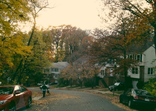 Fall in Arlington 1
