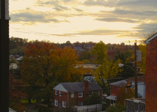 Fall in Arlington 2