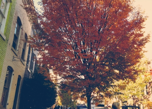 Fall in Georgetown 4