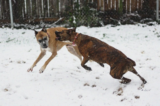 Dogs Snowday 2013