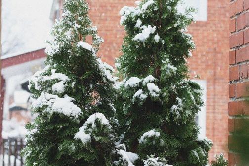 Snowday 2013